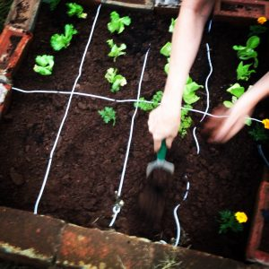Our own square-foot garden.